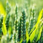 zekat-poljoprivreda